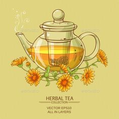 vector illustration with calendula tea in glass teapot