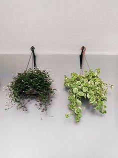 Uma das coisas que mais queremos fazer aqui, desde que voltamos das nossas férias, é colocar mais plantas em casa! A ideia é ter mais verde por todos os lados mesmo. Ter um pouco de natureza por perto para deixar a rotina mais leve. A solução foi investir na nossa varandinha (trabalho ainda em progresso) …