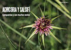Es Madrid no Madriz Magazine Natural, Madrid, Magazine, Plants, Summer, Magazines, Plant, Planting, Planets