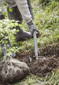 creuser un trou Outdoor Decor, Garden, Anthurium, Plants, Garden Sculpture