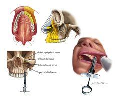 Directorio Odontologico