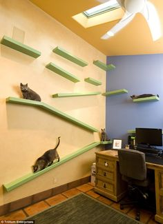 For cat-lovers out there, you can definitely turn your home into a cat playground house. Well, let's take a virtual tour at this guy's home with a cat playground to get ideas! Mimi Chat, Cat Walkway, Manx Cat, Image Chat, Cat Shelves, House Shelves, Hospital Design, Vet Clinics, Cat Playground