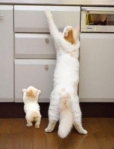 癒される動物の親子写真