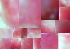Licht - Reflektionen. Rosen-Blätter-Farbharmonie: