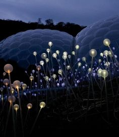 Incredible Christmas Light Display by Bruce Munro