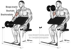 Dumbbell preacher curl. An isolation pull exercise. Main muscles worked: Brachialis, Biceps Brachii (especially long or outer head), and Brachioradialis. Unlike what most people think, the Brachialis is the target, not the Biceps Brachii!