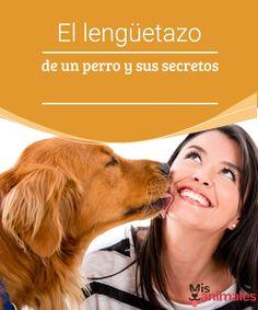 El lengüetazo de un perro y sus secretos  Los perros se comunican de distintas maneras dependiendo de lo que quieran decir. En este artículo explicamos el lengüetazo de un perro y sus secretos.