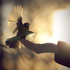 silhouette of bird...love the spread flight feathers