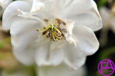 Makro-Blüte | FeenArt | Claudia Böttcher | DSC_6048WAFAFGk