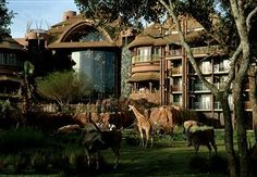 Animal Kingdom Lodge with a room looking out into Safari.