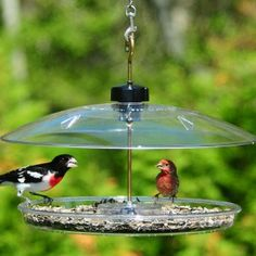 Adjustable cover makes it so you can manage your desired bird size! Want Cardinals? Raise the cover up. Want more sweet little songbirds? Lower the cover down. All New Droll Yankees Covered Platform Feeder!