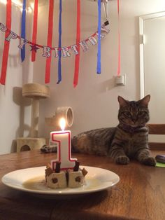 We threw a 1st birthday party for my cat tonight http://ift.tt/2mnA94O