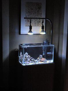 My Gallon Rimless Reef - DIY cabinet and light fixture, Boost LEDs, Hydor powerheads and skimmer Turtle Aquarium, Aquarium Led, Aquarium Stand, Aquarium Setup, Led Aquarium Lighting, Home Aquarium, Reef Aquarium, Bow Front Aquarium, Aquarium Cabinet
