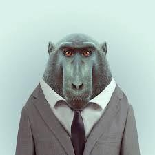 Resultado de imagen de Animals in Clothes