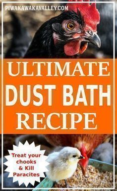 Chickens love a good dust bath this recipe also treats mites and fleas naturall Best Egg Laying Chickens, Laying Hens, Keeping Chickens, Raising Chickens, Dust Bath For Chickens, Backyard Chicken Coops, Diy Chicken Coop, Backyard Chickens, Backyard Ideas