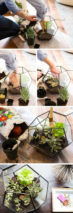 Try a zinc and glass terrarium for a succulent display on your coffee table.