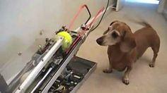 Imagine um mundo onde o seu cão pode brincar com a bolinha sem precisar da ajuda de ninguém. Isso é possível para os engenheiros. Confira os videos.