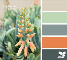 Great living room color scheme. Maybe neutral walls w/ green, grey and orange pops? or green walls?  via seeds