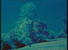 """Everything That Rises Must Converge: Some Notes on """"Trees of Syntax, Leaves of Axis"""" on Notebook   MUBI Everything, Northern Lights, Trees, Notebook, The Incredibles, Leaves, Natural, Beautiful, Tree Structure"""