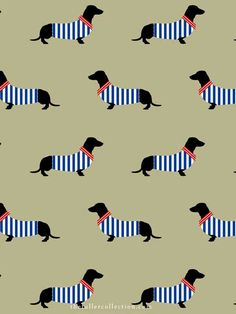 Dog pattern | dachshunds in sweaters