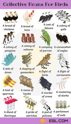 List of animal names with animal pictures in English. Learn these types of animals to increase your vocabulary about animals in English and thus enhanc Learn English Grammar, English Writing Skills, English Idioms, English Vocabulary Words, English Phrases, Learn English Words, English Language Learning, Teaching English, German Language