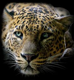 Beautiful colorful pictures and Gifs: Animals- Animales gif photos