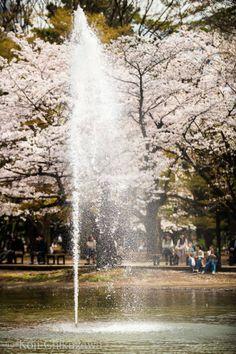 Tokyo Yoyogi Park Tokyo Trip, Tokyo Travel, Go To Japan, Visit Japan, Harajuku Station, Japan Tourism, Meiji Shrine, Yoyogi Park, All About Japan