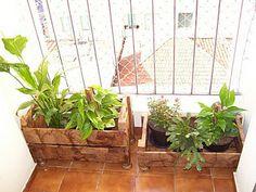 caixotes de feira para plantas