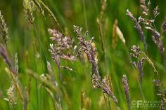 154/365 Grass