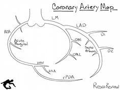 coronary artery anatomy  a  left coronary artery and b