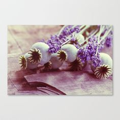 free shipping today Opium poppy capsule Lavender flower still life Stretched Canvas by Tanja Riedel - $85.00