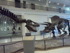 To Do: TTU - Museum of Texas Tech in Lubbock, TX