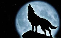 lobo aullando a la luna - Buscar con Google