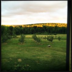 50 Shades of Dead. Our apple orchard: 2009 - 2012 @ http://themuddykitchen.com/