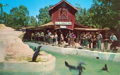 Knott's Berry Farm had a seal pond. 10 cents bought a paper bag of smelts you could throw to them. I went through a lot of dimes...:)