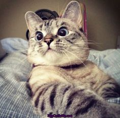 Top 45 funny animal pictures of all time with you. You will find photos of cute and funny animals in the list below. I Love Cats, Crazy Cats, Cute Cats, Funny Cats, Funny Animals, Cute Animals, Funny Cat Photos, Funny Pictures, Animal Gato