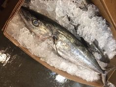 Price of King mackerel is varied depending on the season, products, and the availability. Since mackerel fish is an abundant fish including King mackerel species then the price will not go higher as much as you think