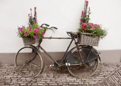Hier finden Sie ein Rost Eimer mit einem Fahrrad gedrehte Blume Pflanzer mit Flechtweide Korb Pflanzer auf der Vorder- und Rückseite.