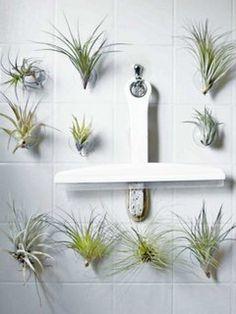 Indoor-Gärten aus Wasser und Luft – Pflanzenfreude.de