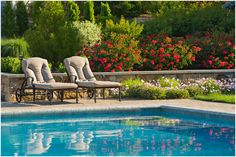 Swimming Pool Landscaping Plants