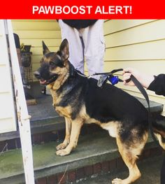 Is this your lost pet? Found in Lakewood, OH 44107. Please spread the word so we can find the owner!  Description: Male German Shepard found on Bunts Rd in lakewood. Friendly, freaked out though.   Nearest Address: Bunts Road, Lakewood, OH, United States