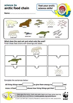 Here's a WWF lesson plan on Arctic food chains. too tough for first graders, but could be changed around. idea of a food chain. Teaching Social Studies, Teaching Science, Science Education, Preschool Lessons, Science Lessons, Life Science, Arctic Habitat, Science Penguin, First Grade Lessons