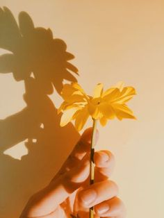 Yellow Aesthetic Pastel, Aesthetic Colors, Aesthetic Images, Pastel Yellow, Aesthetic Photo, Mellow Yellow, Aesthetic Wallpapers, Aesthetic Vintage, Yellow Flower Pictures