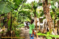 A Farm in the Middle of a Kingston Ghetto » Real Jamaica  http://realjamaica.org/experiences/farm-middle-kingston-ghetto