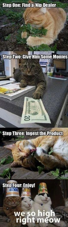 The life of a catnip addict.