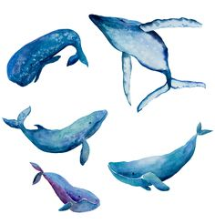 Whales on Behance