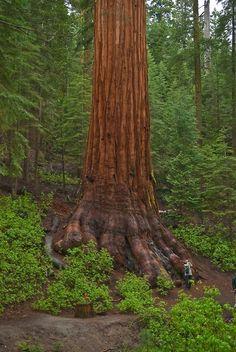 Bigfoot Sequoia, California, at Blue Pueblo tumblr