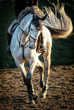 Hunter Jumper Horses... embrace the spirit... celebrate the beauty. www.o3animalhealth.com #lovetojumphorses