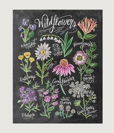 Chalk Art – Floral Art – Wildflower Field Guide Print – Wall Decor – Flower Illustration – Chalkboard Print – Chalkboard Art - Home Chalkboard Print, Chalkboard Lettering, Chalkboard Designs, Chalkboard Decor, Summer Chalkboard Art, Chalkboard Drawings, Lettering Art, Chalk Drawings, Typography