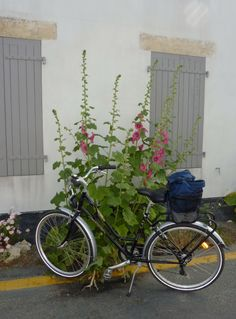 roses tremieres ile de re Holidays 2017, Paradis, Beautiful Islands, Pretty Pictures, Color, Beautiful Gardens, Bicycle, Cute Pics, Cute Photos